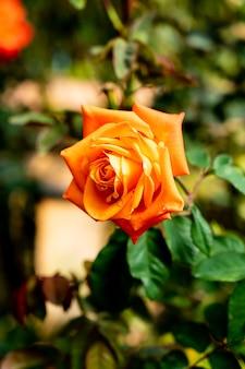 Mooie roze bloemen