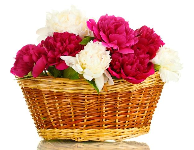 Mooie roze en witte pioenrozen in mand met strik op wit wordt geïsoleerd