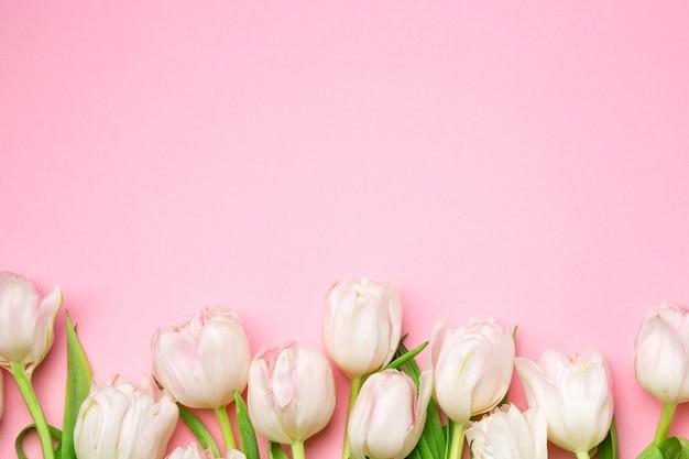 Mooie roze en witte tulpen op roze achtergrond