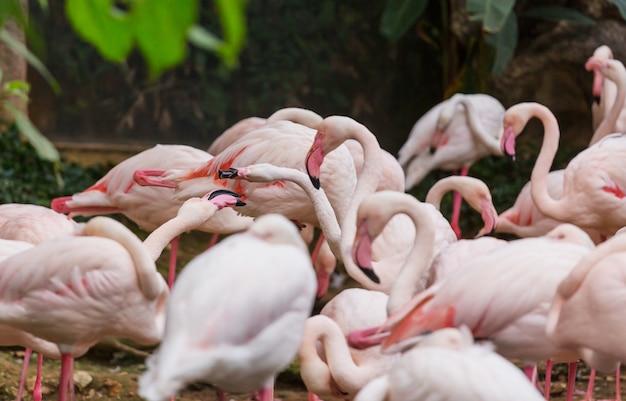 Mooie roze flamingo close-up