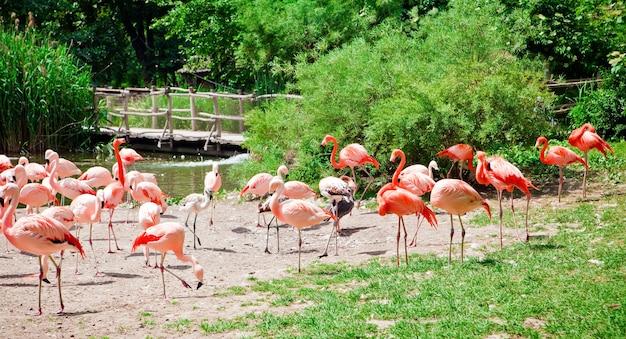 Mooie roze flamingo's in een natuurlijke dierentuin