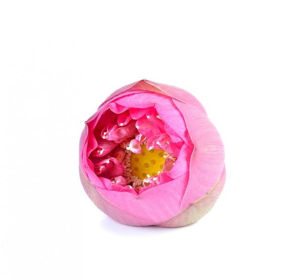 Mooie roze lotus-geïsoleerde bloem