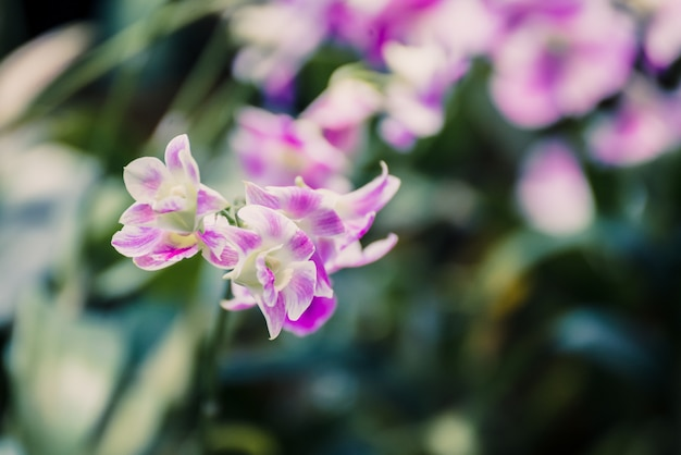 Mooie roze orchideebloem die in de tuin bloeit. natuurlijke bloem