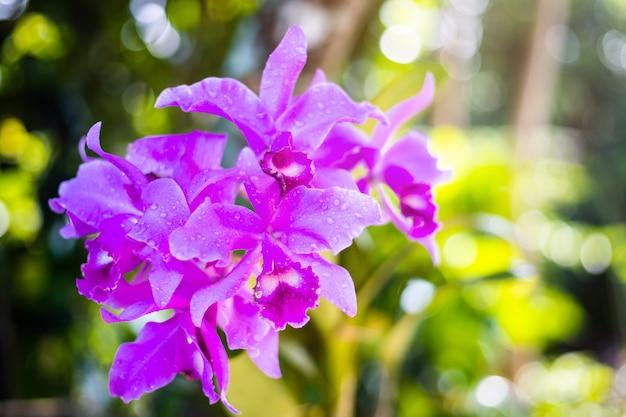 Mooie roze orchideebloem in groene tuin
