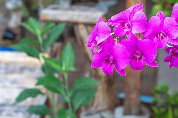 Mooie roze orchideebloemen in de tuin.