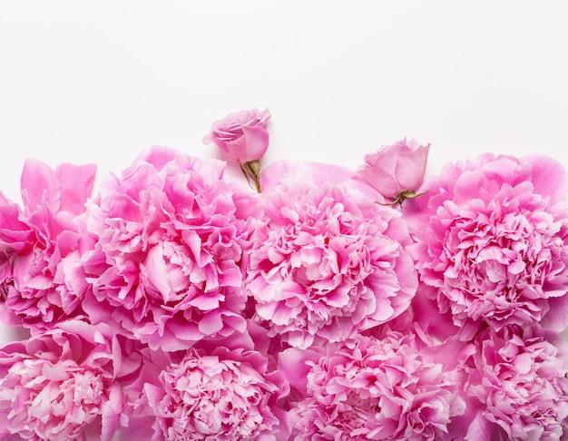 Mooie roze pioenbloem