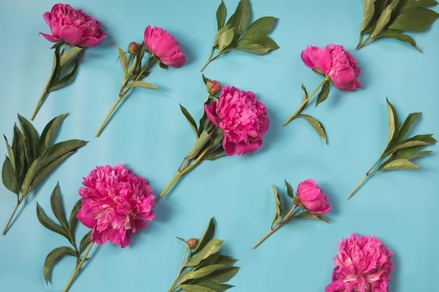 Mooie roze pioenbloemen op pittige pastelkleur blauwe achtergrond door diagonaal