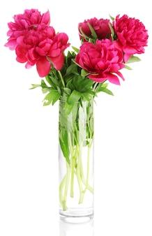 Mooie roze pioenrozen in glazen vaas met strik op wit wordt geïsoleerd