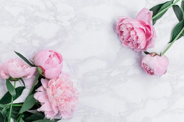 Mooie roze pioenrozen op een marmeren achtergrond