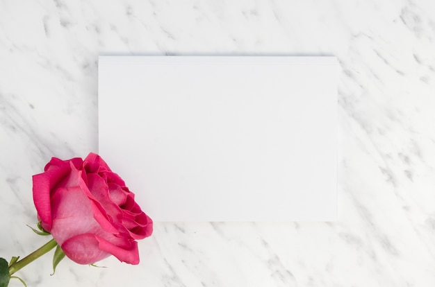 Mooie roze roos en lege kaart