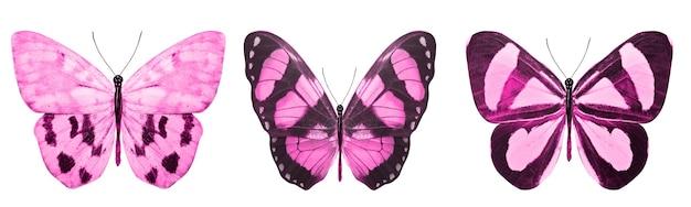 Mooie roze tropische vlinders geïsoleerd.