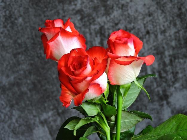 Mooie rozen op een grijze achtergrond. een cadeau voor een date op valentijnsdag.