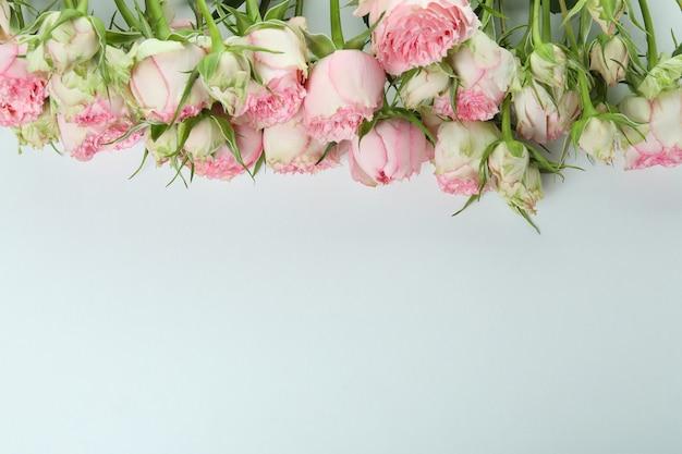 Mooie rozenbloemen die op witte achtergrond worden geïsoleerd