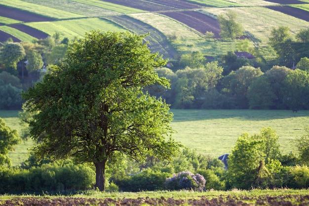 Mooie rustige lente breed panorama van groene velden die zich uitstrekt tot horizon onder heldere heldere blauwe hemel met grote groene boom op verre heuvels en dorp achtergrond. landbouw en landbouw concept.