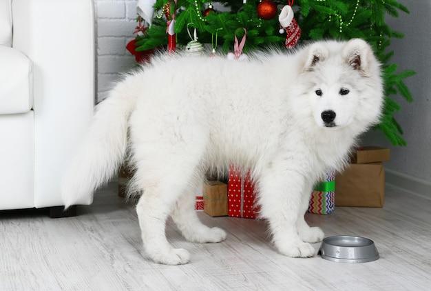 Mooie samojeed-hond met metalen kom in de kamer met kerstboom op het oppervlak