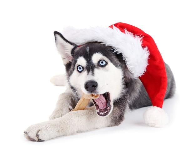 Mooie schattige husky puppy met kerstmuts, geïsoleerd op wit