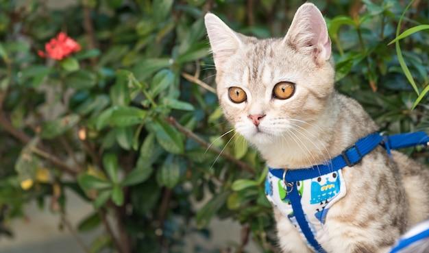 Mooie schattige kleine kat met mooie gele ogen op wit zand in de tuin buiten