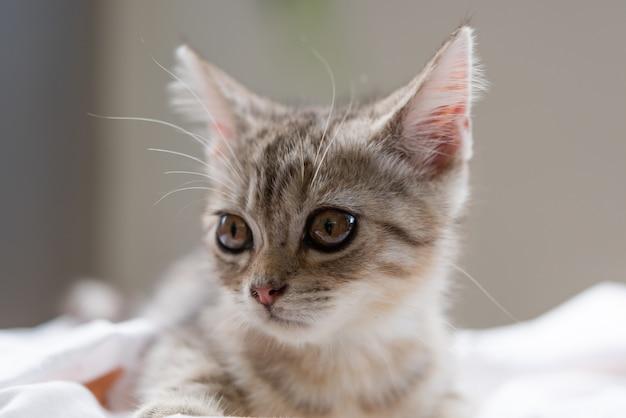 Mooie schattige kleine kat op witte achtergrond