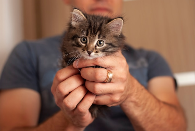 Mooie schattige kleine kitten holden door de mens