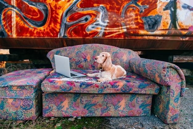 Mooie senior cocker spaniel hond liggend op de oude bank voor laptop met roestige metalen graffiti muur.