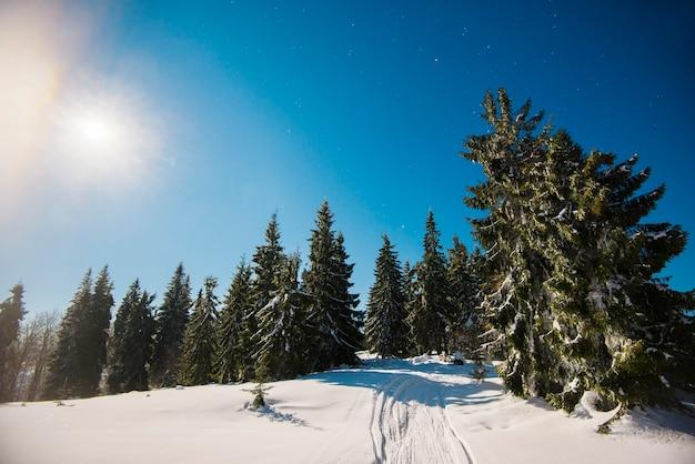 Mooie slanke sparren groeien tussen met sneeuw bedekte sneeuwbanken op een heuvel tegen de blauwe lucht en de heldere maan op een ijzige winternacht. concept rust buiten de stad in de winter