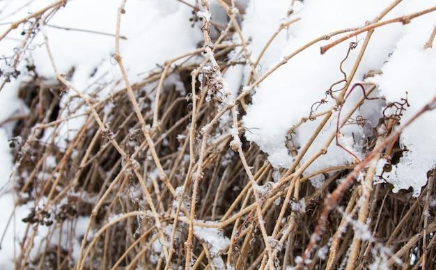 Mooie sneeuwval. sneeuw op de takken van struiken en bomen