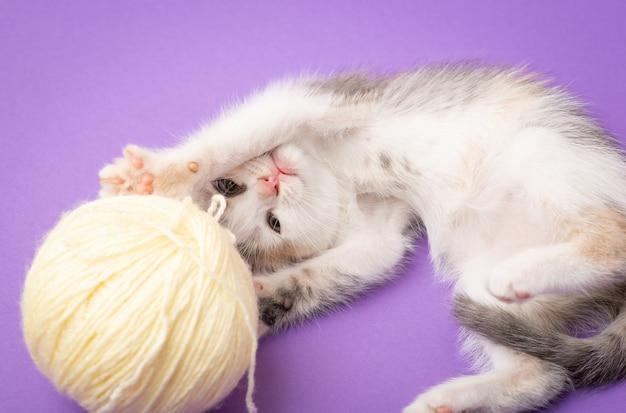 Mooie speelse kitten met bal van draad op paarse achtergrond. grappig katje aan het spelen