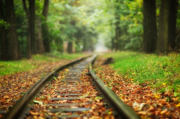 Mooie spoorlijn in de herfst in een stadspark