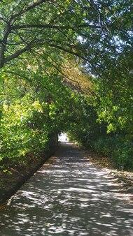 Mooie straat in een zomerpark