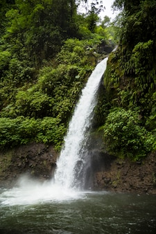 Mooie stromende waterval in regenwoud in costa rica