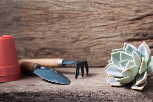 Mooie succulent met tuingereedschap op houten tafel
