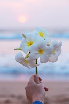 Mooie tak met bloemen plumeria in een vrouwelijke hand