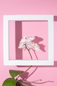 Mooie tak van bloeiende witte orchidee in een vierkant podium voor presentatie op een roze achtergrond.
