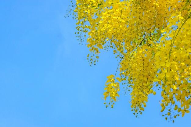 Mooie thaise gele bloem