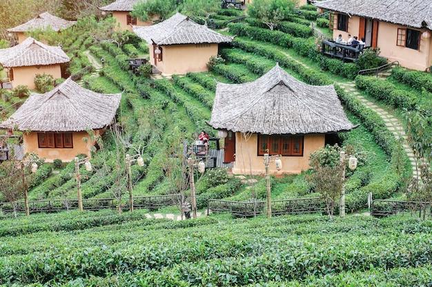 Mooie theetuin in het thaise dorp ban rak