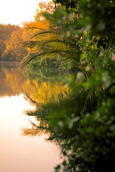 Mooie toneel van mangrove bos en kustmilieu in oostelijk van thailand