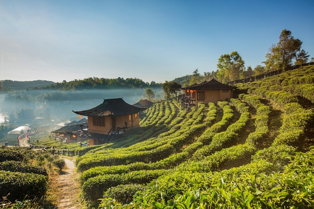 Mooie toneelmening van huis op theegebied op berg in mae hong son, thailand
