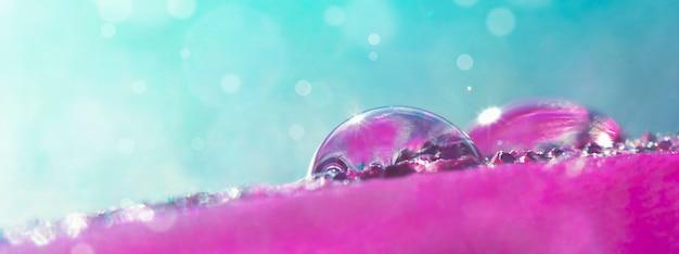 Mooie transparante waterdruppels op een veer in roze en blauwe tinten in zonlicht met bokeh