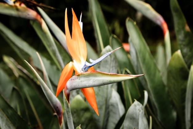 Mooie tropische bloem met vage achtergrond