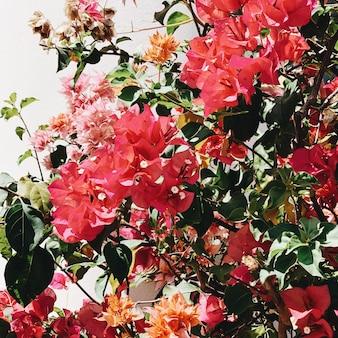 Mooie tropische exotische rode en oranje bloemen bloeien op grote weelderige