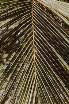 Mooie tropische kokospalmtak. minimalistisch patroon en print met retro vintage kleuren