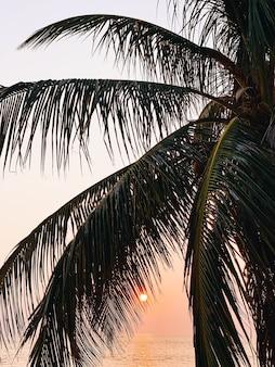 Mooie tropische palmboom op leeg strand met zee bij prachtige warme gele zonsondergang met dieprode zon