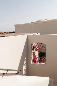 Mooie tropische plantenboom met rode bloemen in beige raam met zonlichtschaduwen.