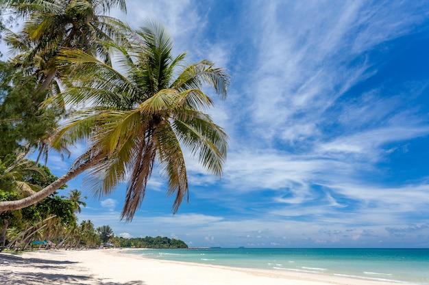 Mooie tropische strandoverzees en oceaan met kokosnotenpalm