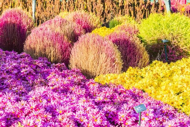 Mooie tuin en bloem