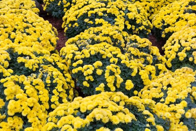 Mooie tuin van bloemenbloesems