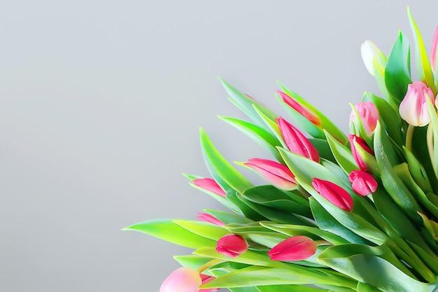 Mooie tulpen op een grijze achtergrond lentebloem kaart