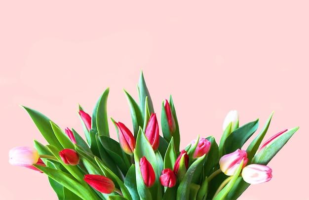 Mooie tulpen op een roze achtergrond lentebloem kaart