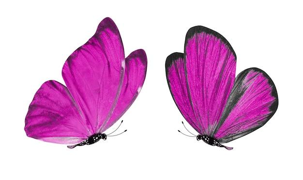 Mooie twee roze vlinders geïsoleerd op een witte achtergrond