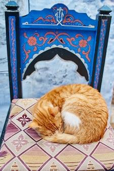 Mooie verdwaalde katten slaapgang in straten marokko